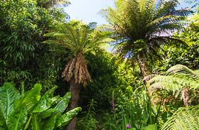 Subtropische Gärten